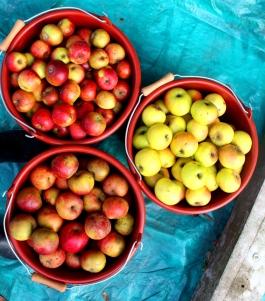 0 Apfelsorten