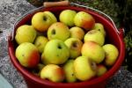 1 Äpfel