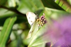 6 - Folkestone Schmetterling