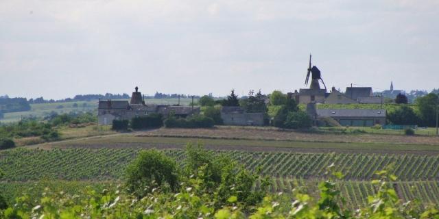 Reben Windmühle