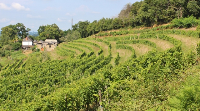 Guirardel Anpflanzung