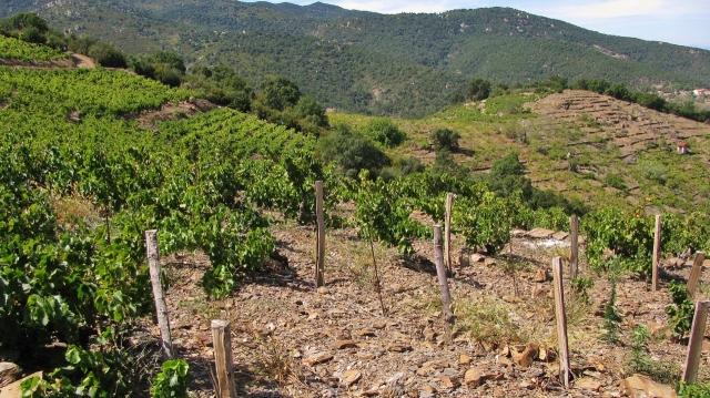 Landschaft im Roussillon